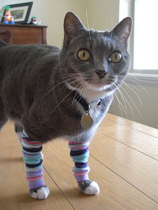 DIY Kitty Legwarmers