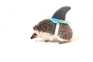 Little Sharkhog