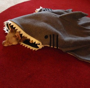 Silly Shark Bed