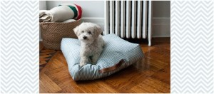 Dog Days of Sewing: 12 Ideas for Your Pet