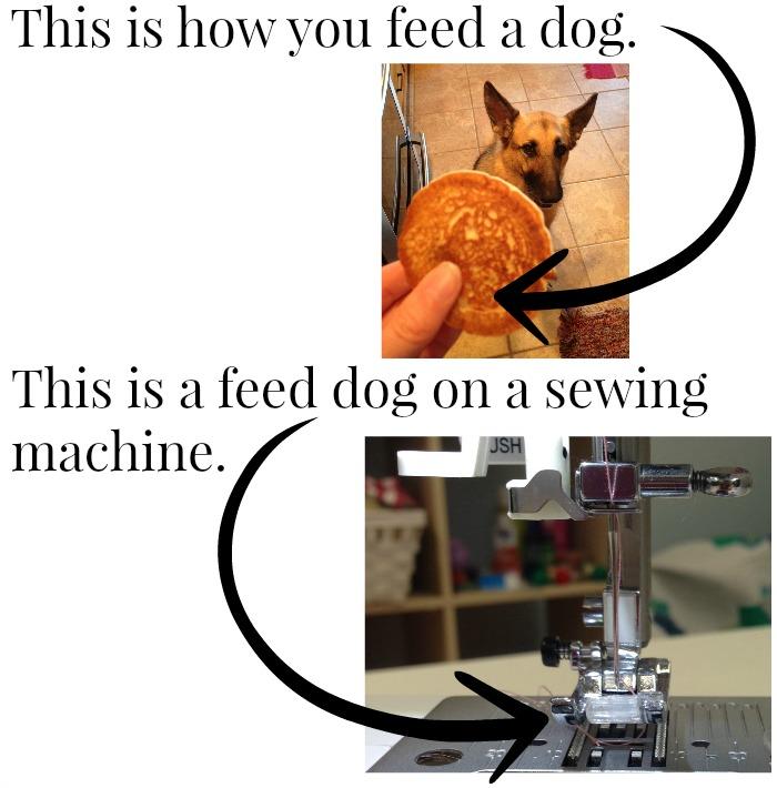 feed dog