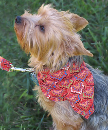 Doggie Dior