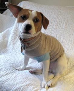 Easy DIY Dog Sweater